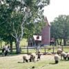 蓼科ふれあい牧場のイメージ画像2