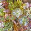 GREENのイメージ画像2