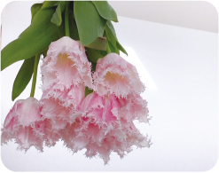 FLOWER FIELD GATE店のイメージ