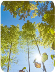 安藤百福記念 自然体験活動指導者養成センターのイメージ