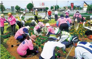 毎年恒例の花壇の植栽作業。今年は2160株の花を植えました