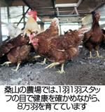 桑山の農場では、1羽1羽スタッフの目で健康を確かめながら、8万羽を育てています